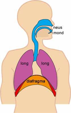 Åndedrætsbesvær bør tages alvorligt
