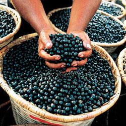 acai piller bær