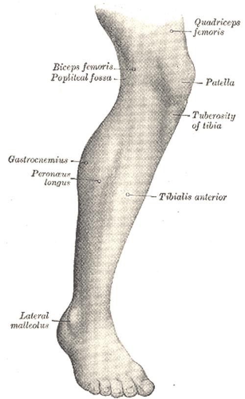 træning af lægmuskler