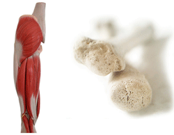 Symptomerne på D-vitaminmangel inkkluderer muskel- og knoglesmerter