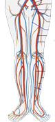 Dårligt blodomløb i benene