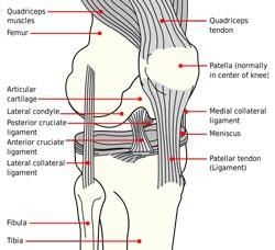 Ligamenter og forstuvninger