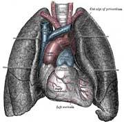 Kold lungebetændelse hos ældre
