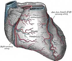 myokardieinfarkt symptomer