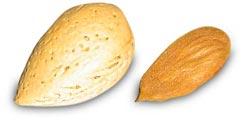 Mandelolie stamer fra søde og bitre mandler