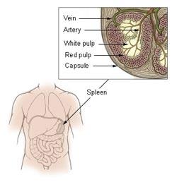 ondt i venstre side af brystet