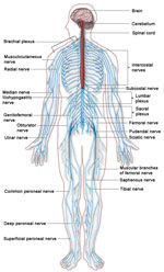 nervebetændelse