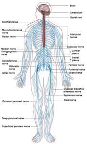 nervebetændelse i benene