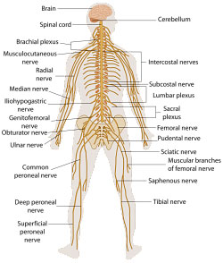 neurologiske sygdomme symptomer