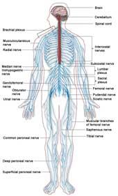 Neurologiske sygdomme