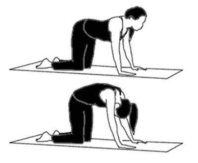 pilates øvelser - katteøvelsen