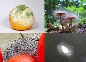 Skimmelsvamp findes i mange forskellige varianter