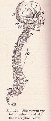 Slidgigt i nakken er en degenerativ sygdom