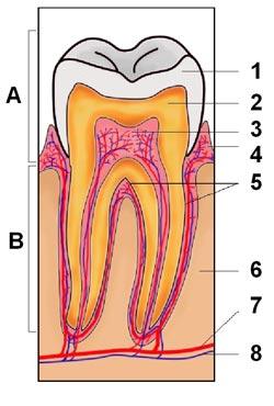 En tandbyld