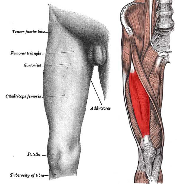 forstrækning i knæhasen